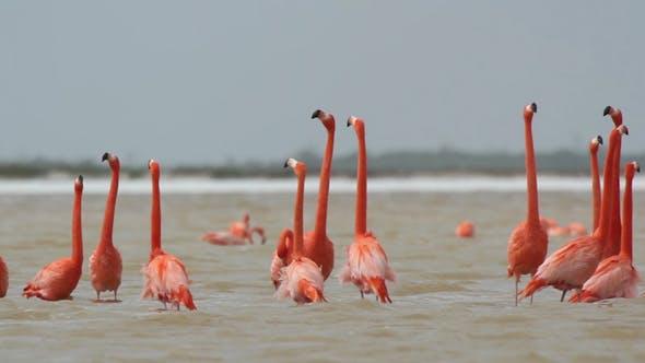 Thumbnail for Pink Flamingo Mexico Wildlife Bird 18