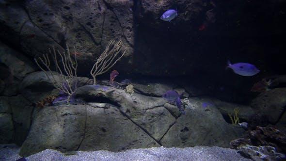 Thumbnail for Fish And Sea Life In An Aquarium 2
