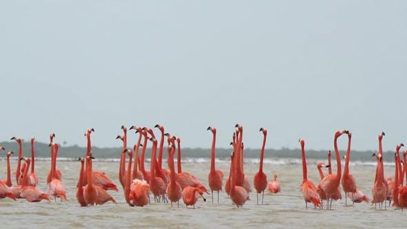 Thumbnail for Pink Flamingo Mexico Wildlife Bird 5