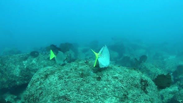 Cover Image for Fish Mexico Diving Baja California Sur 9