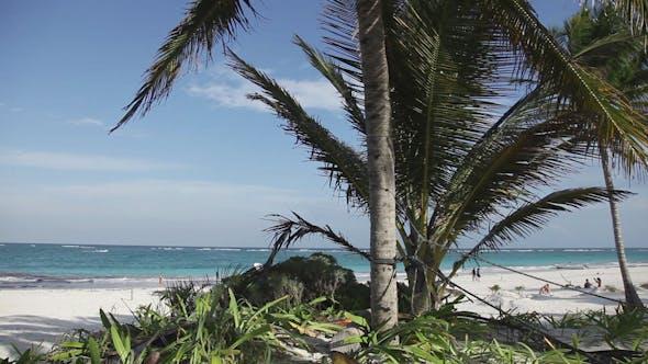 Thumbnail for Tulum Paradise Beach Mexico Caribbean Palm Tree 5