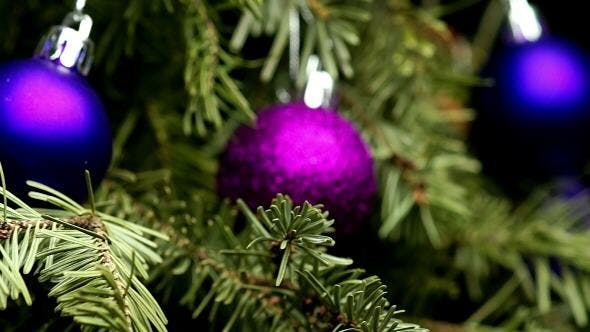 Thumbnail for Coniferous Tree with Colorful Balls