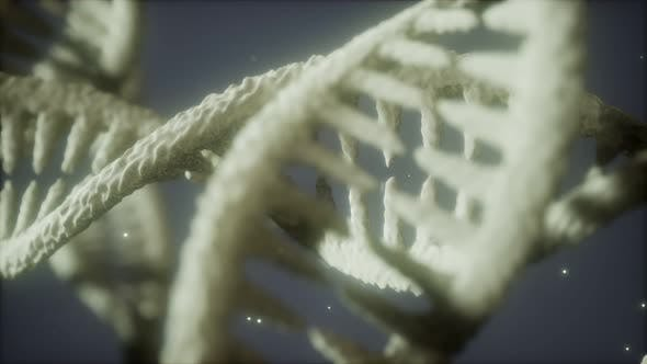 Thumbnail for Double Helical Structure of Dna Strand Close-up Animation
