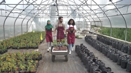 Positive Multiracial Growers Walking in Greenhouse
