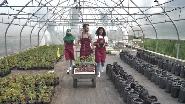 Thumbnail for Positive Multiracial Growers Walking in Greenhouse