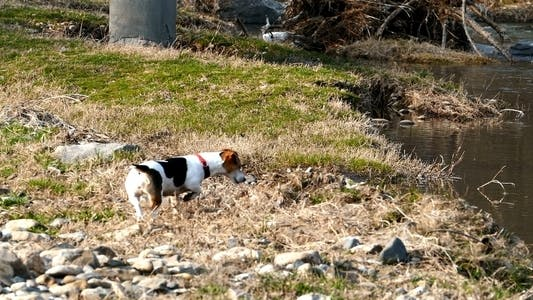 Cover Image for Dog on the Trail of a Wild Animal 4