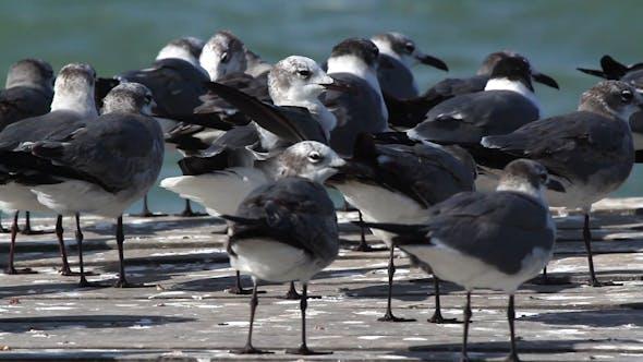 Thumbnail for Birds Wildlife Mexico 1