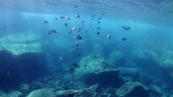 Thumbnail for Fish Mexico Diving Baja California Sur 14