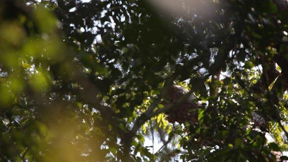 Thumbnail for Forest Jungle Vegetation 1