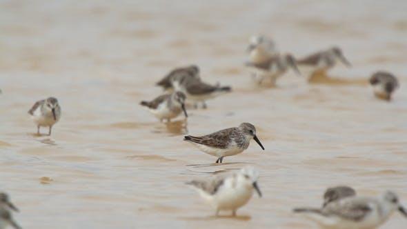 Thumbnail for Birds Mexico Wildlife 1
