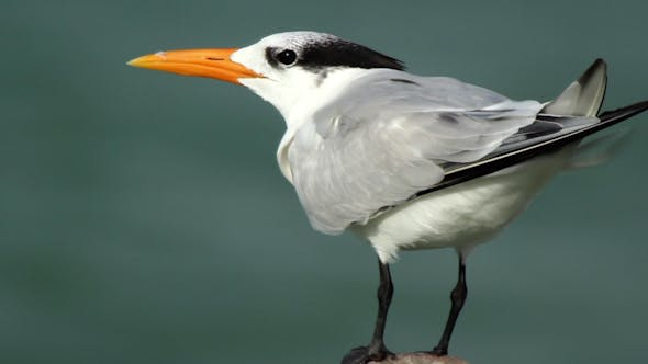 Thumbnail for Birds Wildlife Mexico 11
