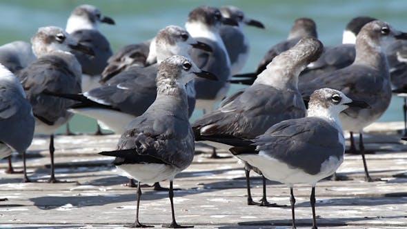 Thumbnail for Birds Wildlife Mexico 7