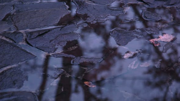 Thumbnail for Puddles on the Stone Pavement