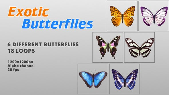 Thumbnail for Exotic Butterflies