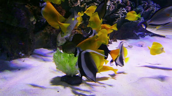 Thumbnail for Tropical Fish Feeding Underwater