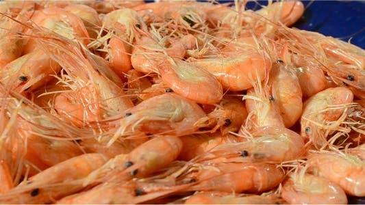 Thumbnail for Shrimp 3
