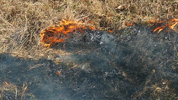 Burning Dry Grass In The Steppe