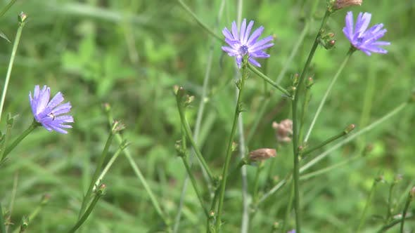 Thumbnail for Purple Wildflowers (2 Of 2)