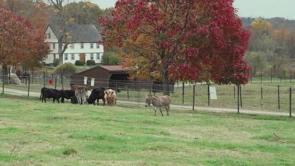 Thumbnail for Herd Of Cattle Grazing (1 Of 9)
