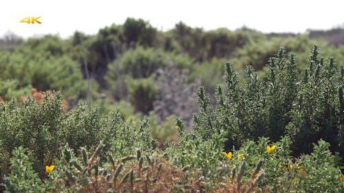 Scrub Vegetation and Shrubland With Slider