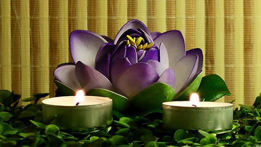 Thumbnail for Candles and Waterlily