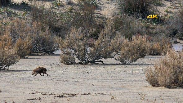 Thumbnail for Real Natural Wildlife Animal Hedgehog 1