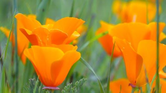 Thumbnail for Orange Flowers