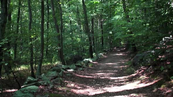 Thumbnail for A Hike In The Deep Woods (2 Of 8)