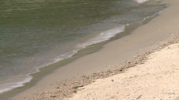 Thumbnail for Beach Fun (1 Of 15)