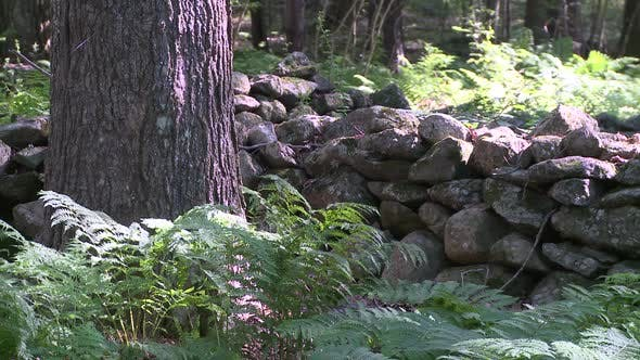 Thumbnail for Trees Next To Stonewall (2 Of 2)