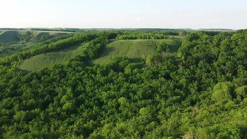 aerial view of the green forest in a hilly area. flying drone over the tree crowns