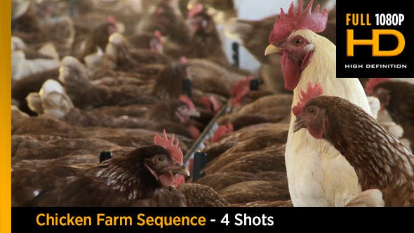 Thumbnail for Chicken Farm Sequence - 4 shots