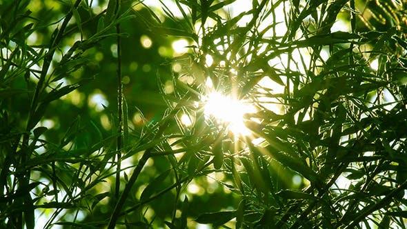Thumbnail for Bright Sun Shines Through Tree Foliage