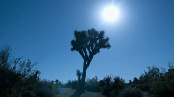 Cover Image for Moon Rise Over Joshua Tree