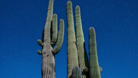 Thumbnail for Night Desert Cactus With Star Lapse 1