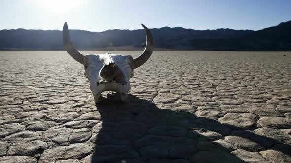 Thumbnail for Desert Floor With Cow Skull - Death Valley