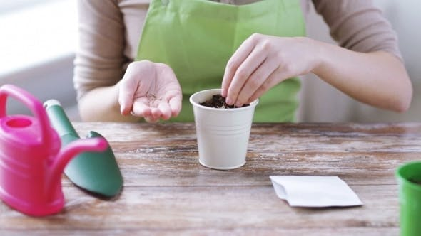 Thumbnail for Woman Sowing Seeds To Soil In Pot