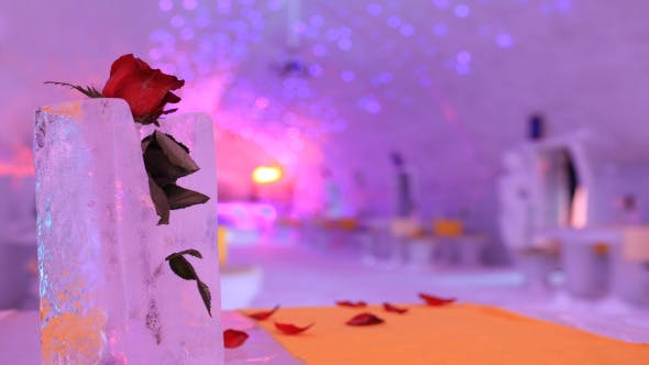 Thumbnail for Rose Flower In The Ice Church