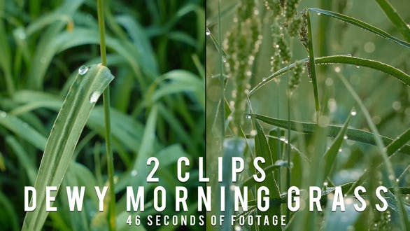 Thumbnail for Dewy Morning Grass