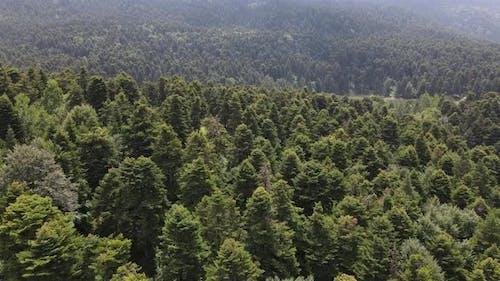 Natürliche Umwelt