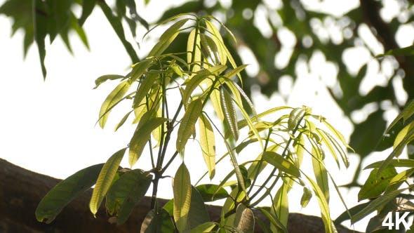 Thumbnail for Bud Leaf