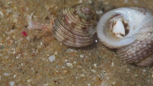 Cover Image for Hermit Crabs