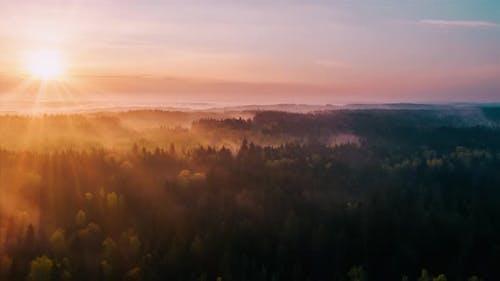 Aerial Timelapse Hyperlapse Misty Morning in Forest
