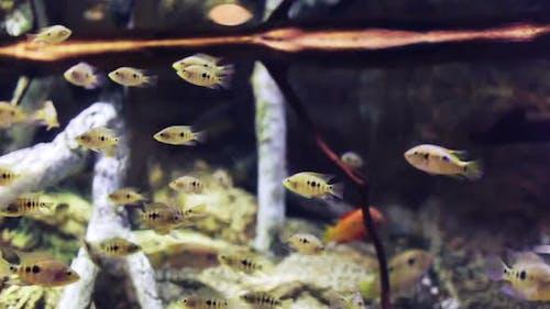 Fish Sealife Marine Aquarium Wildlife Underwater 2