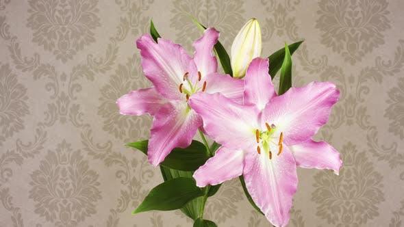Thumbnail for Flower Wallpaper 00