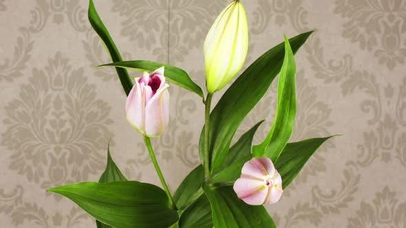 Thumbnail for Flower Wallpaper 02