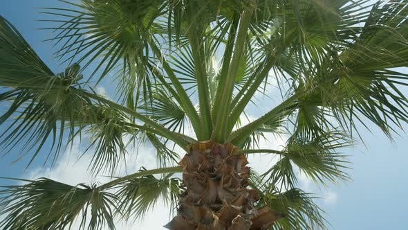 Thumbnail for Palm Trees Panning