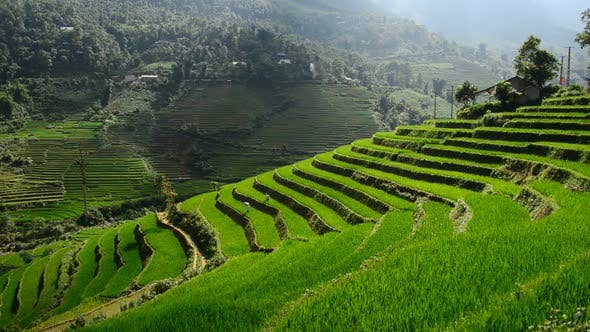 Thumbnail for Scenic Rice Farm Terraces - Northern Mountains Of Sapa Vietnam 5