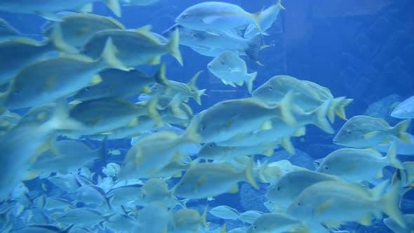 Thumbnail for Large Aquarium Fish Tank 4