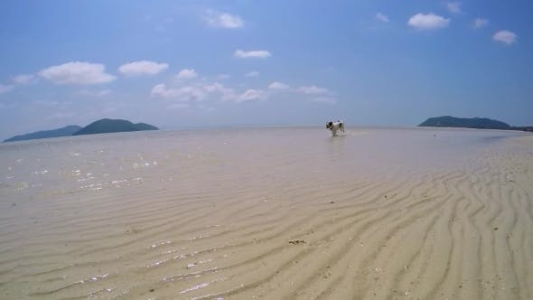 Thumbnail for Active Athletic Funny Dog Running In Sea On Beach